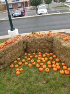 PZ little pumpkins